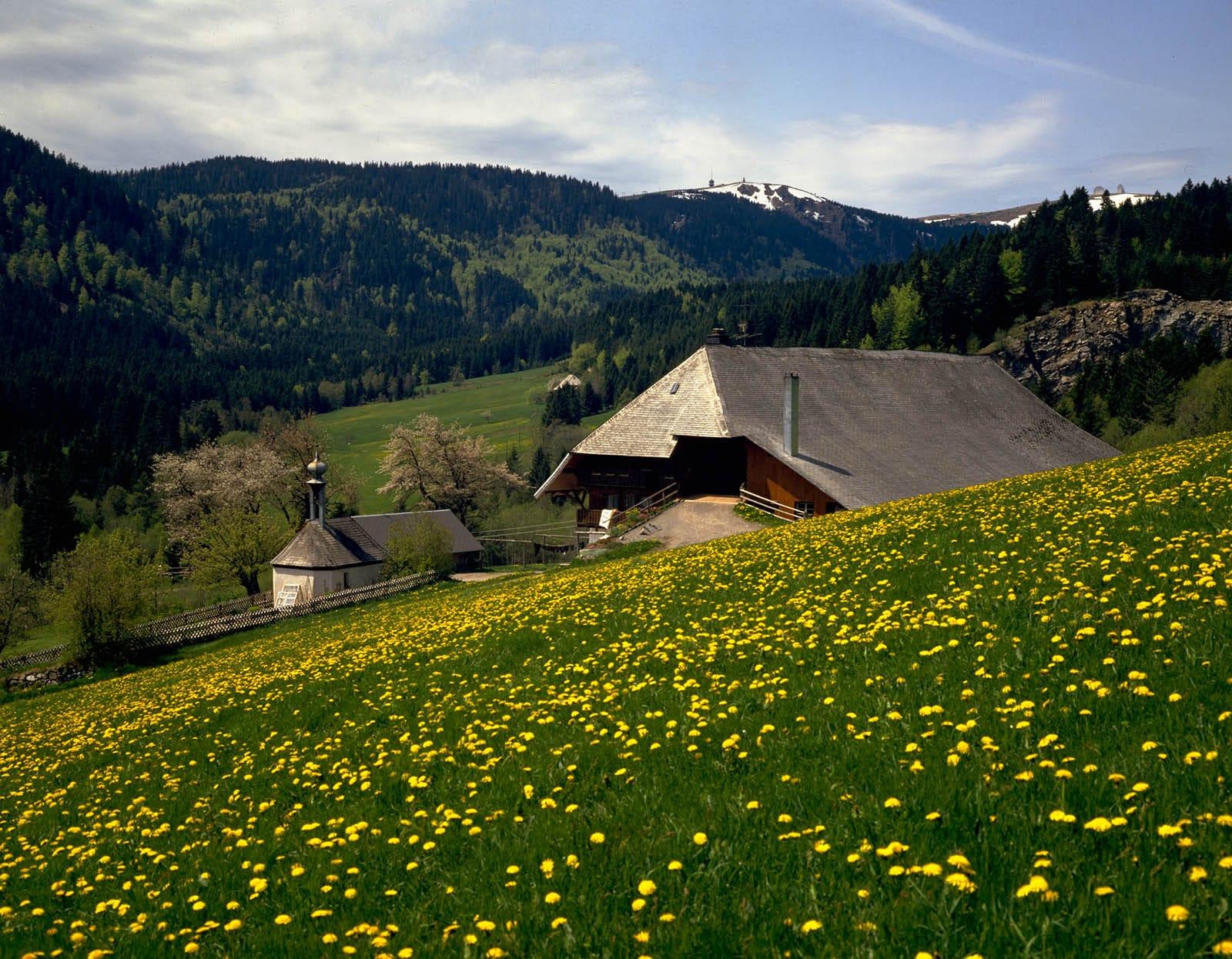 Germania In Alta Foresta Nera Con I Bambini Familygo