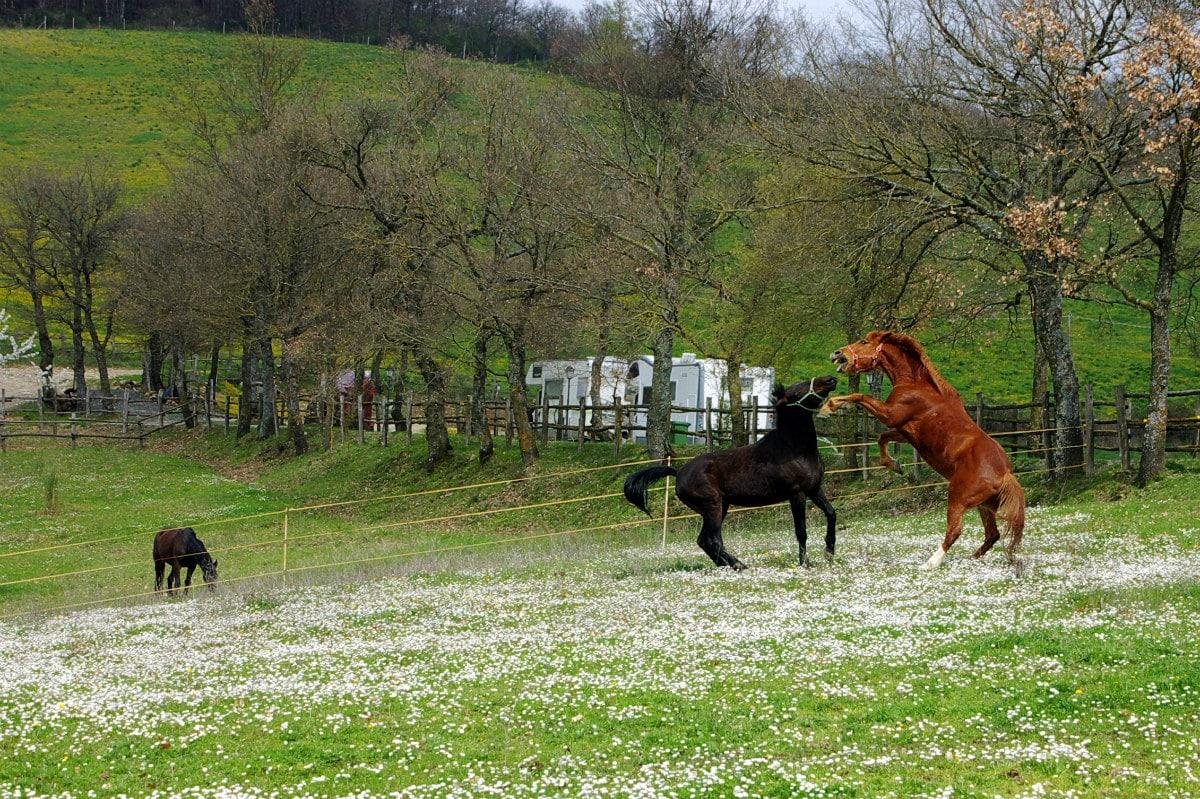 Agriturismo per bambini Arezzo - La Collina delle Stelle, cavalli