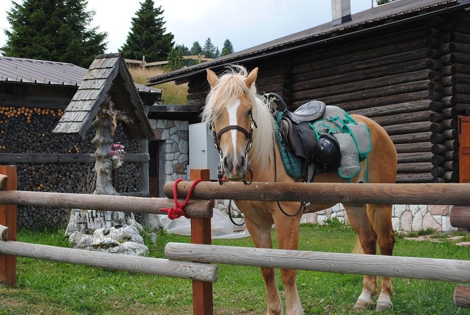 Hotel a Folgaria per bambini: Hotel al Sole, cavalli