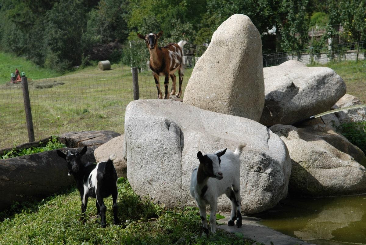 Agriturismo Alto Adige bambini - Residence fattoria Obermoarhof, fattoria