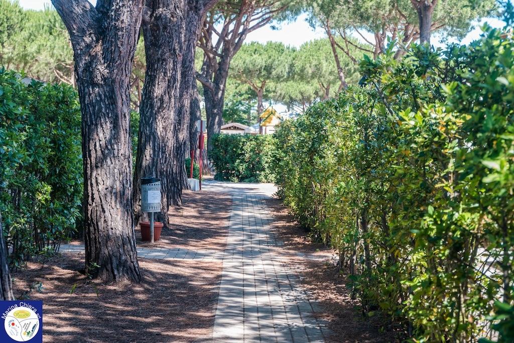 Villaggi Toscana mare per bambini: Camping Village Marina Chiara, pineta