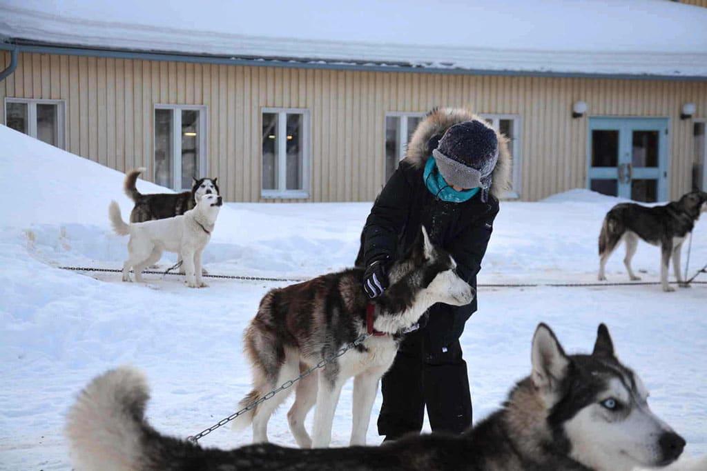 Viaggio in Lapponia con i Bambini, Salla, Finlandia husky