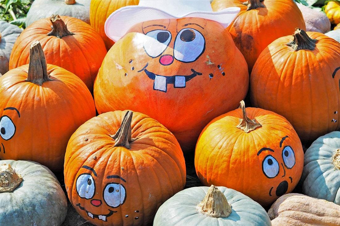 Zucca Di Halloween Piu Grande Del Mondo.Campi Di Zucche You Pick Anche In Italia Ecco Dove Sono Familygo