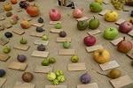 paderna-frutti-antichi