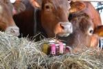 galizia-12 mucche e prodotti