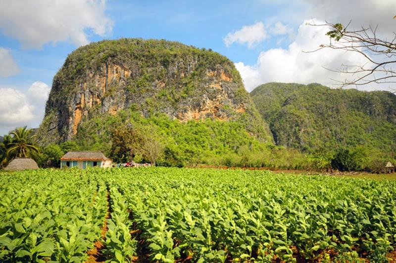 Cuba con bambini, natura valle Vinales, Mogotes