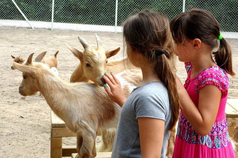 Milano Marittima con bambini, fattoria