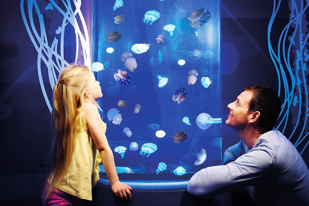 gardaland-2017-gardaland sea life aquarium_1311_meduse