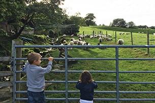 scozia-glasgow-pecore-alla-fattoria