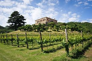 veneto-villa-vescovi-vigne