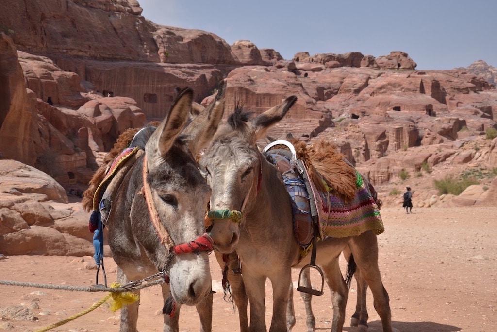 Gli asinelli di Petra, amici dei bambini