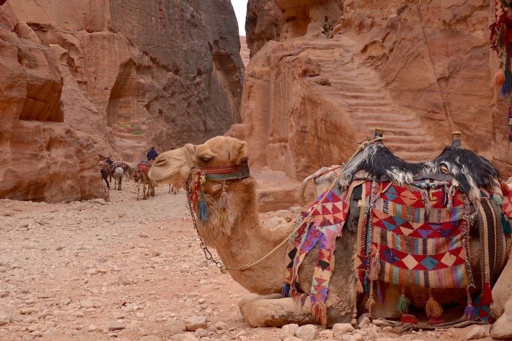 A Petra in cammello