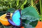 casa-farfalle5