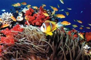 giordania-Aqaba-Underwater