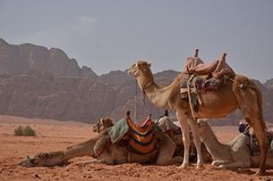 giordania-wadi-rum-deserto8