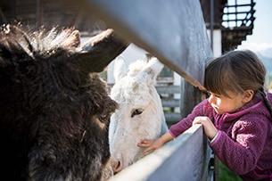 kinderhotels-garberhof-animali-bambini