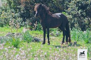 sardegna-coop-giunone-cavallinodellagiara_genoni