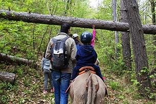 Trekking con gli asini per bambini nel bosco