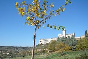 Weekend Assisi con bambini