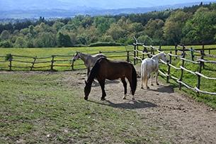 Weekend nel verde in Toscana, La collina delle stelle fattoria degli animali