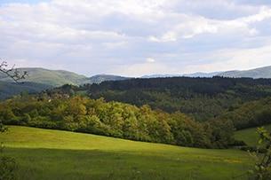 Weekend nel verde in Toscana, Parco delle Foreste Casentinesi