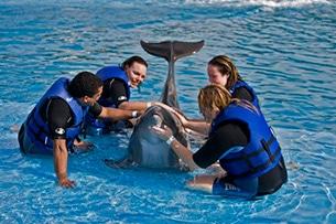 Baja California, delfini