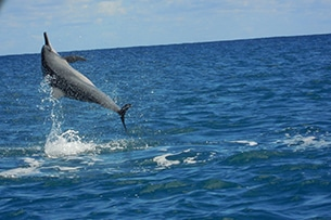Mauritius con bambini, i delfini