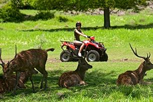 Mauritius con bambini, safari