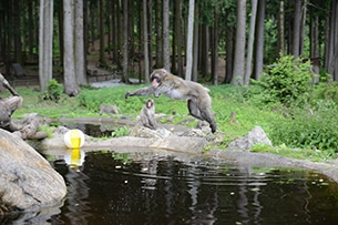 Carinzia sentieri tematici con bambini e passeggini monte scimmie