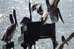 Festival-Mediterraneo-Genova