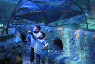 Il mondo incantato di Gardaland Sea Life, il grande acquario a due ...